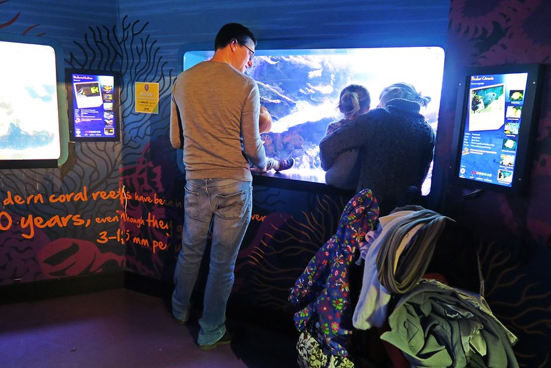 SEALIFELondon Aquarium-KLOOK客路-17docintaipei (16)