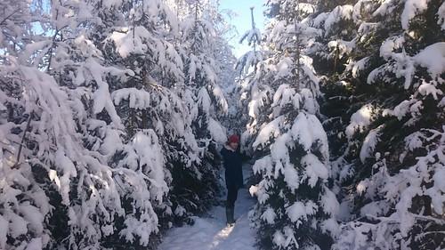 Sneeuw in Killeberg
