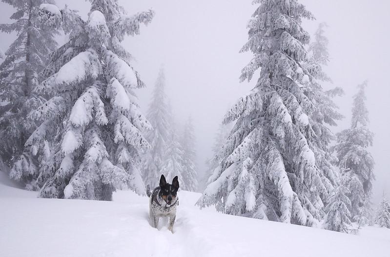 Karkonosze zimą pies