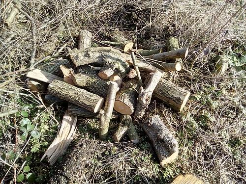 logs Feb 18 2
