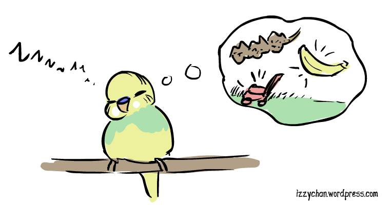 budgie dreaming of millet banana lawn mowers