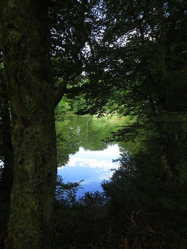 20140804 02 098 Jakobus Wald See Bäume