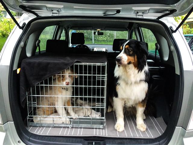 elämä kahden koiran kanssa-27