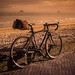 Specialized Sunset