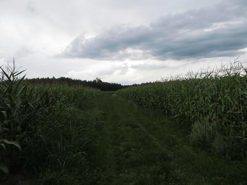 20140804 02 505 Jakobus Weg Maisfelder Wald Wolken