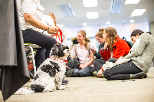 Therapy dogs CEP library 2018-8