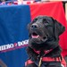 Fwd: Hero Dogs Charity Fair 8 Jan NSWC Carderock Division West Bethesda, MD (2nd set of pictures)