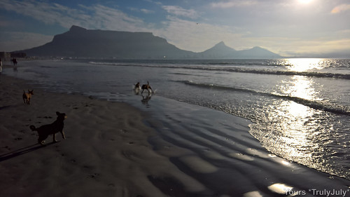 The dogs are having a jol at Milnerton Beach when all of a sudden Gigi spots a seal swimming in the waves!