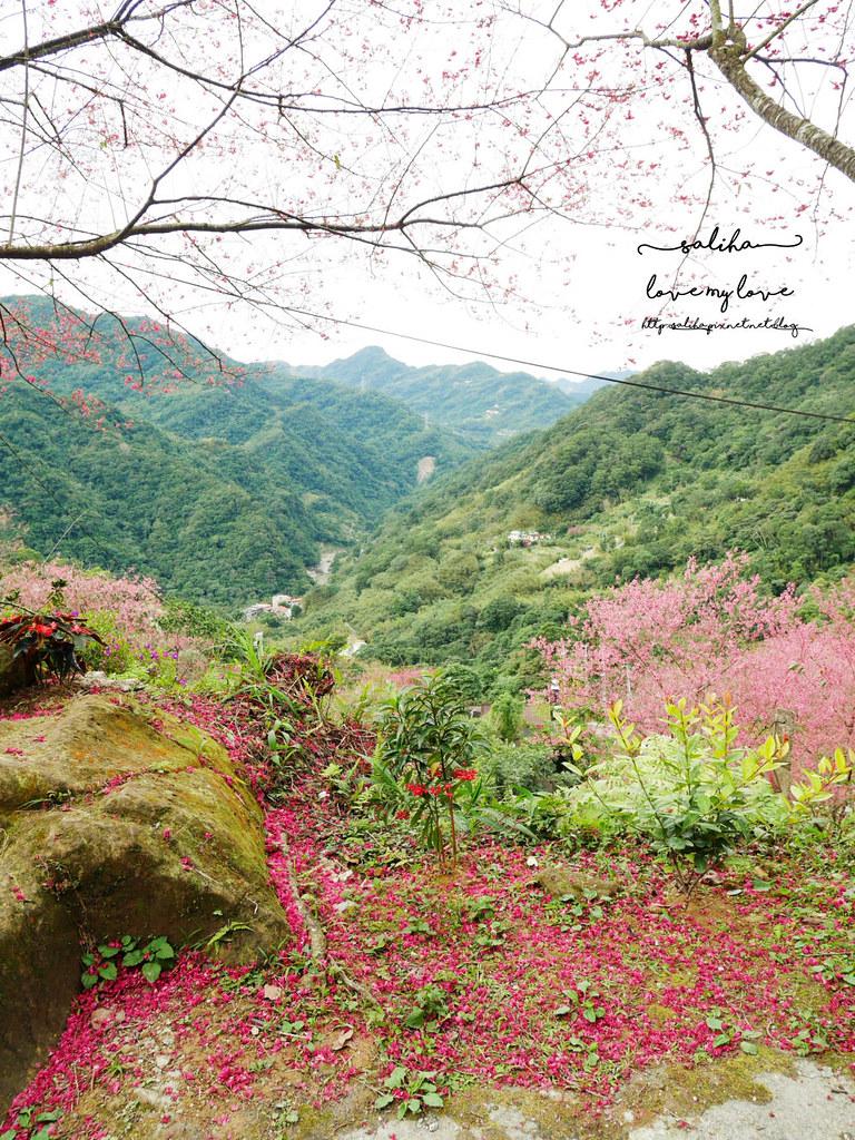 三峽一日遊景觀餐廳推薦花岩山林 (41)