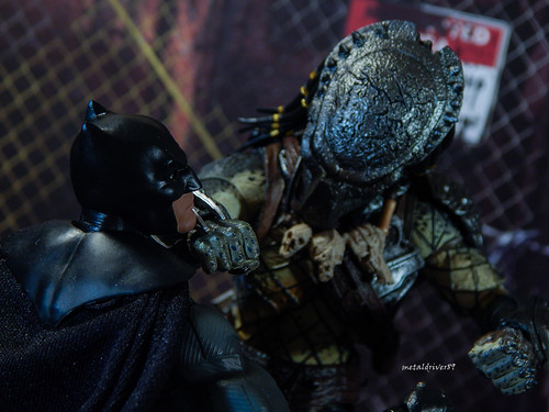 Batman V Predator 3 (alternate focus)
