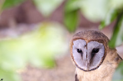 Rutland Owl and Falconry Centre.