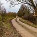 Waresley Woods