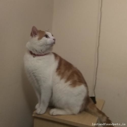 [Reunited] Wed, Feb 14th, 2018 Lost Male Cat - Golf Links Road, Bettystown, Meath