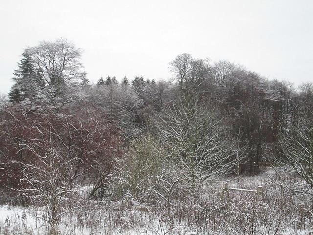 Winter garden 8