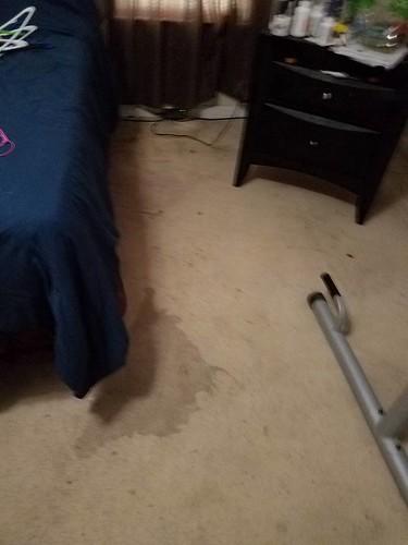 Carpet Cleaning Rockville MD