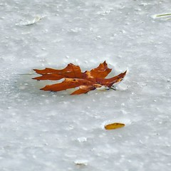Frozen leaves - Penitentiary Glen