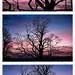 Treelogy of Trees