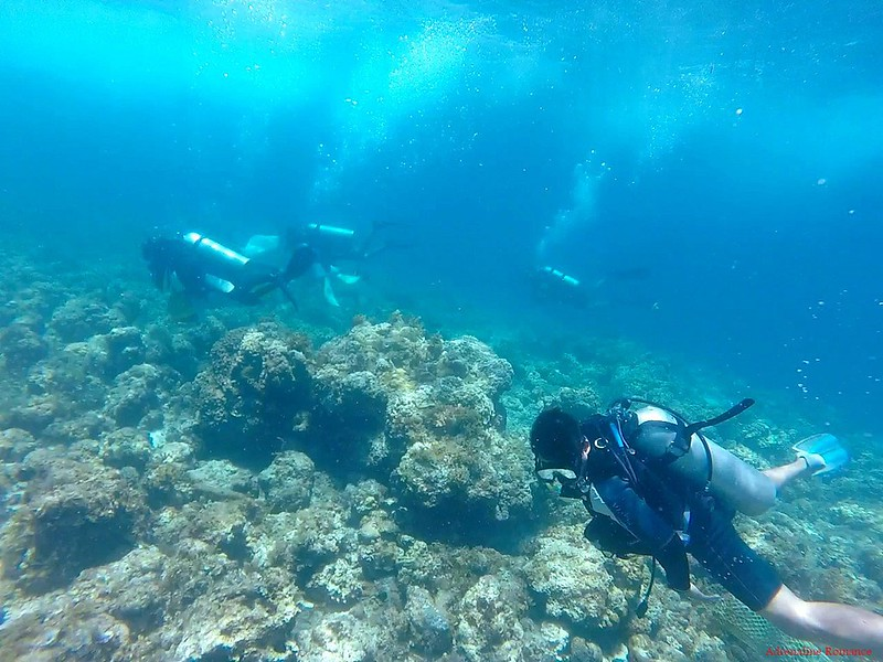 Reef cleanup