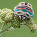 Picasso bug by andredekesel