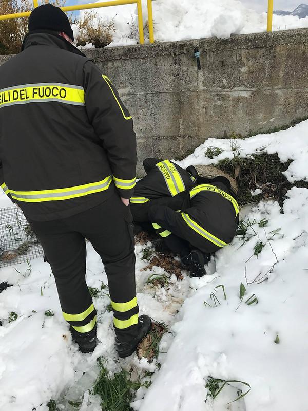 Vigili del Fuoco salvano una cucciolata