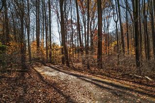 Wheaton Regional Park MD - Bright Fall