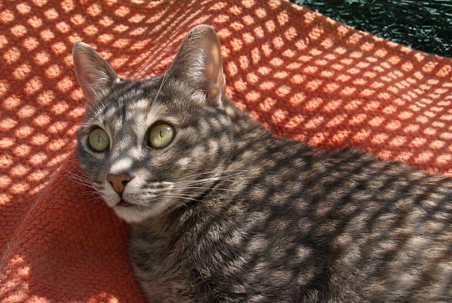 Katzen aus aller Welt