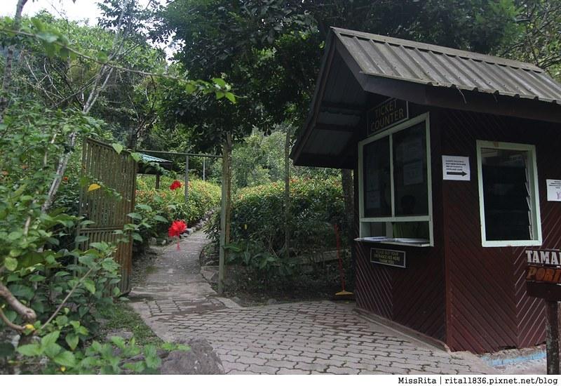 馬來西亞自由行 馬來西亞 沙巴 沙巴自由行 沙巴神山 神山公園 KinabaluPark Nabalu PORINGHOTSPRINGS 亞庇 波令溫泉 klook 客路 客路沙巴 客路自由行 客路沙巴行程68