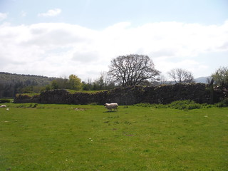 Wall Remnants of Y Gaer (Cicucium Roman Fort)