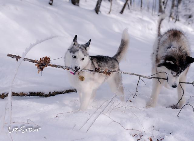 20180117 Snow Dogs_177