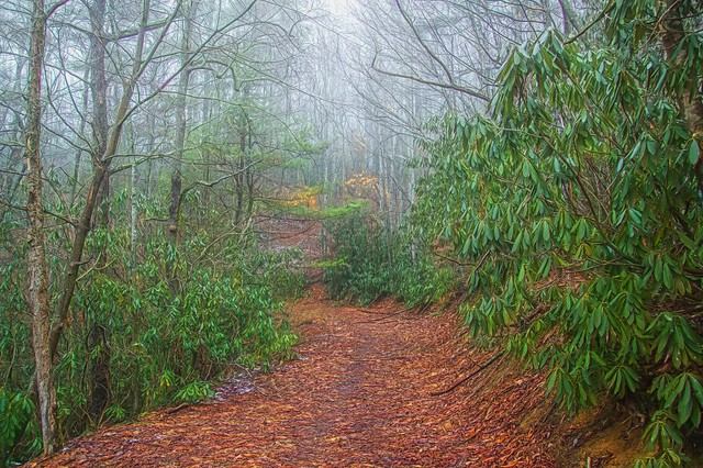 Foggy Fire Road Cherokee National Forest