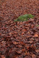 Verdure automnale - Photo of Laprade