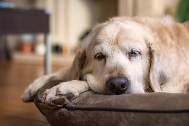 55/365: Let sleeping dogs lie