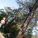 Arborist 1