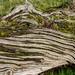 Textured log - Wootton Park, Henley-In-Arden, Warwickshire. UK