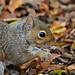 Squirrel ....