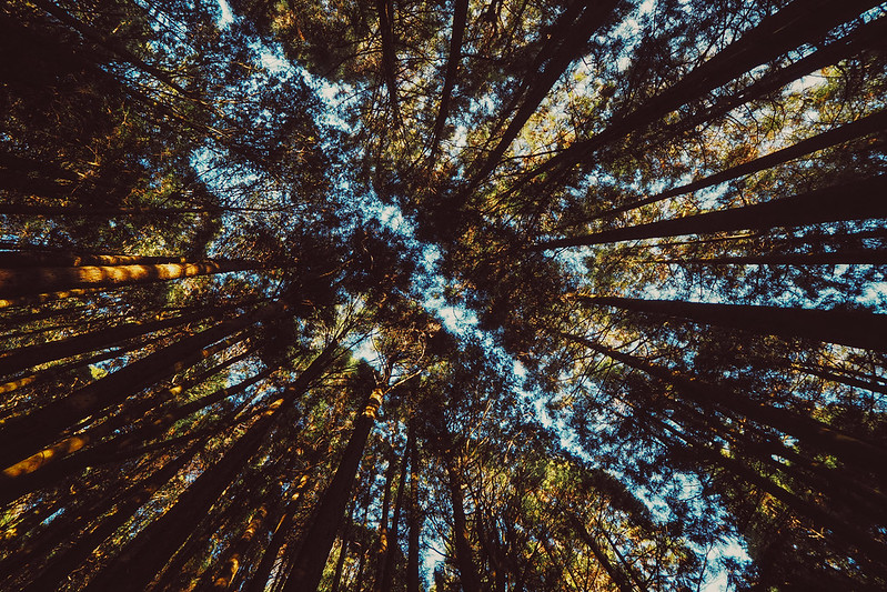 Forest|Alishan
