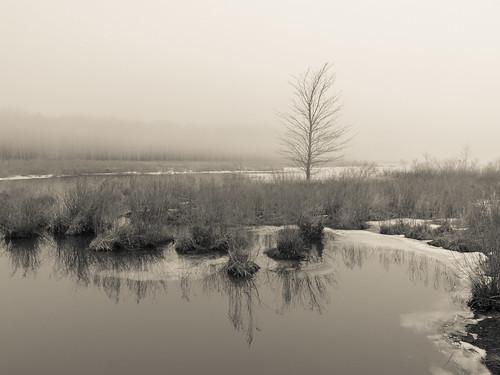 tree water lake pond shore reflections winter sullivancounty landscape blackandwhite