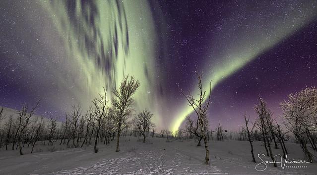 Björkliden Auroras