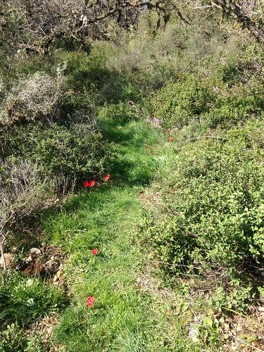 Wild Anemonies & Hyacinths Trail