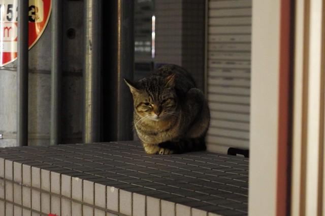 Today's Cat@2018-03-03