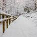 Winter in Linn Park