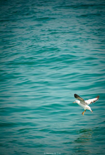 bird saintmartin, Nikon D5200, Sigma 70-300mm F4-5.6 DG OS