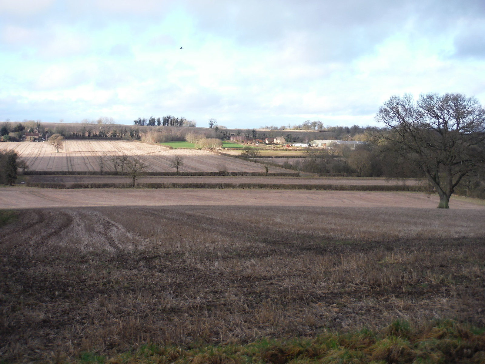 Fieldscape, Woodeaton Wood