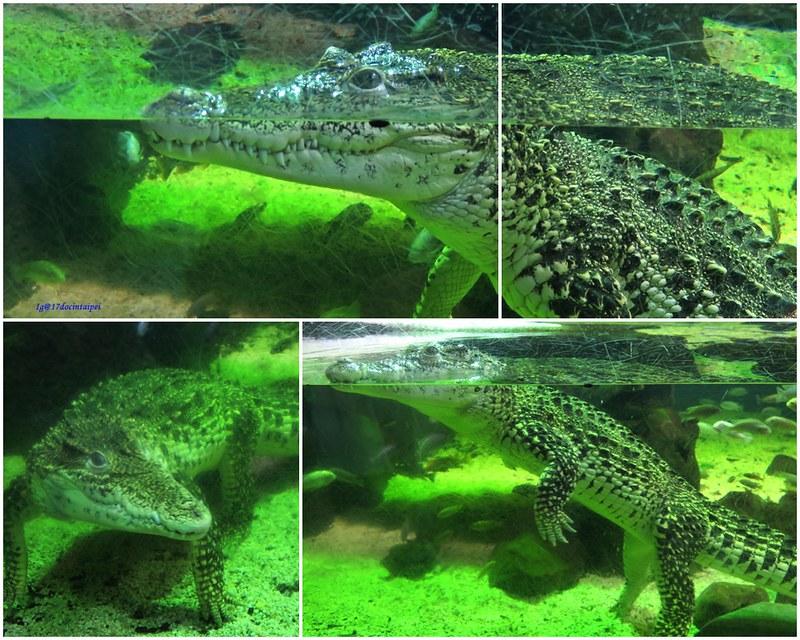 SEALIFELondon Aquarium-KLOOK客路-17docintaipei (20)
