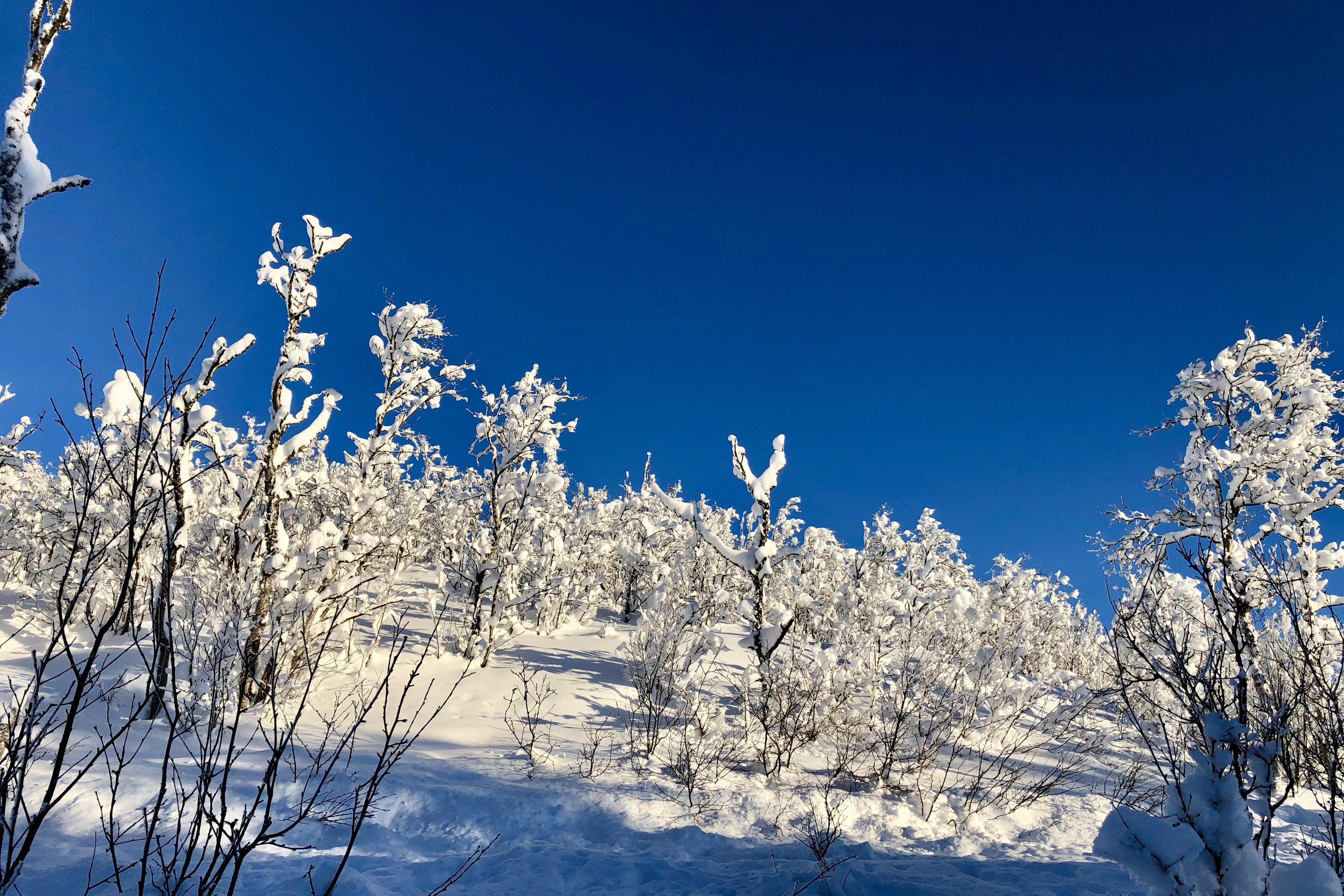 Vinter på Myrland