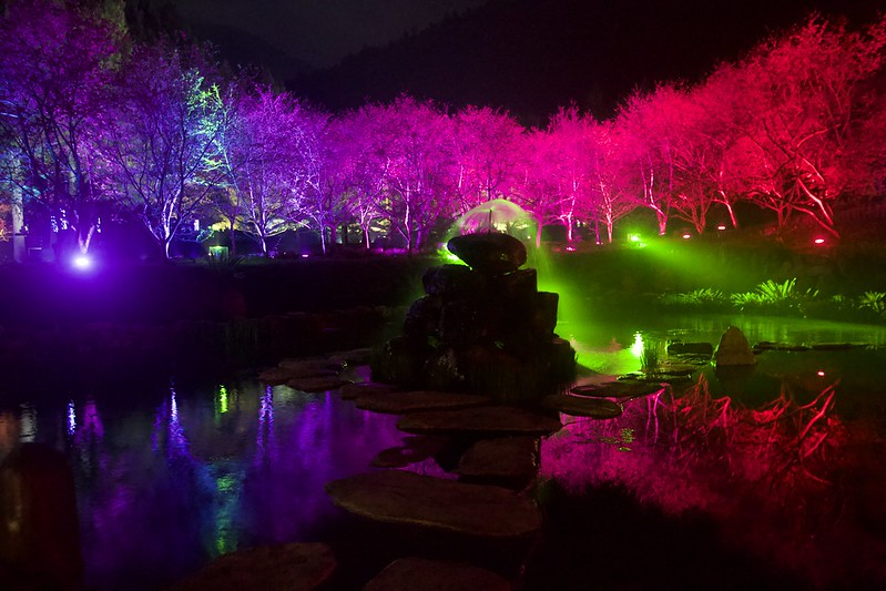 台灣第一夜櫻