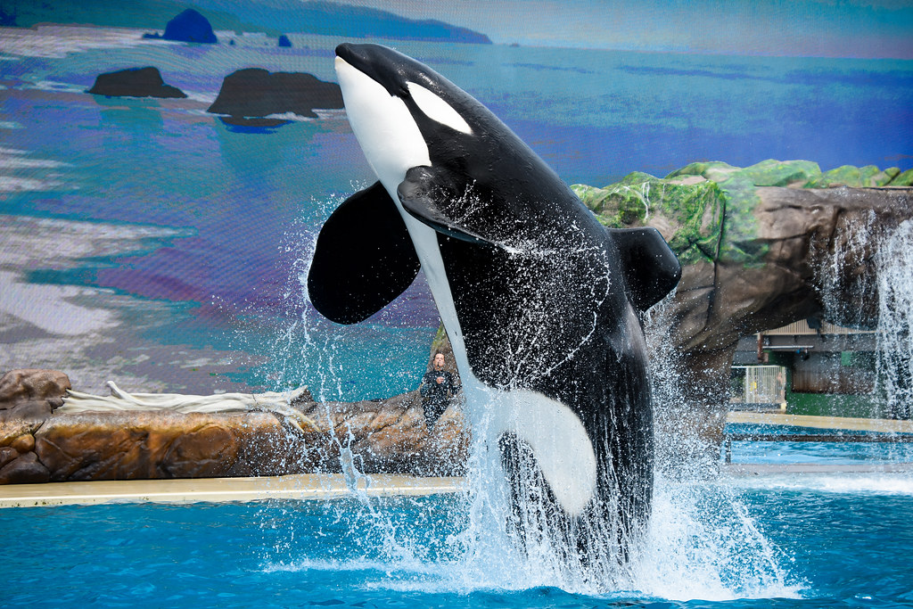 Hotels Near Seaworld San Diego
