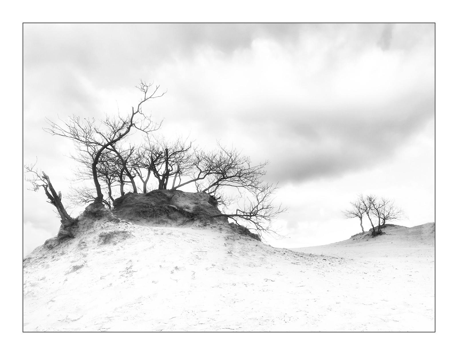 Dutch landscape / Brabant III