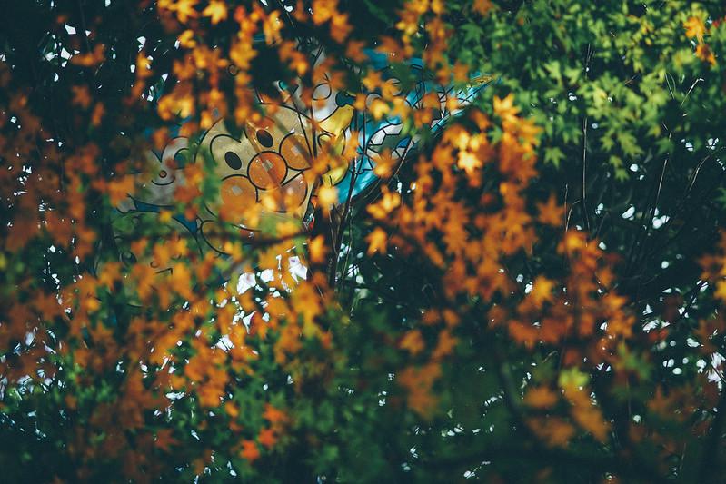 楓葉|Maple