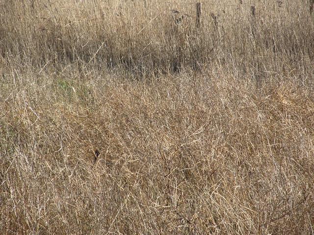 Find the 2 deer
